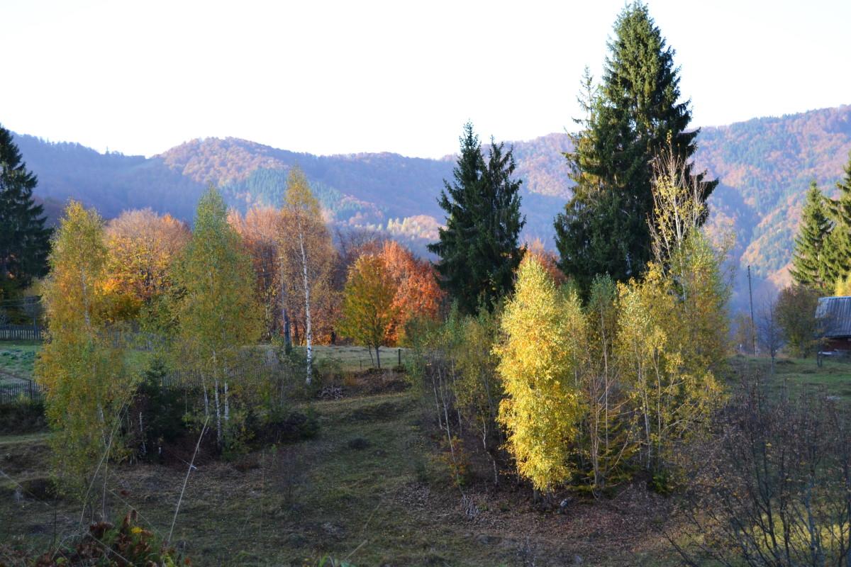 золота осінь пейзаж