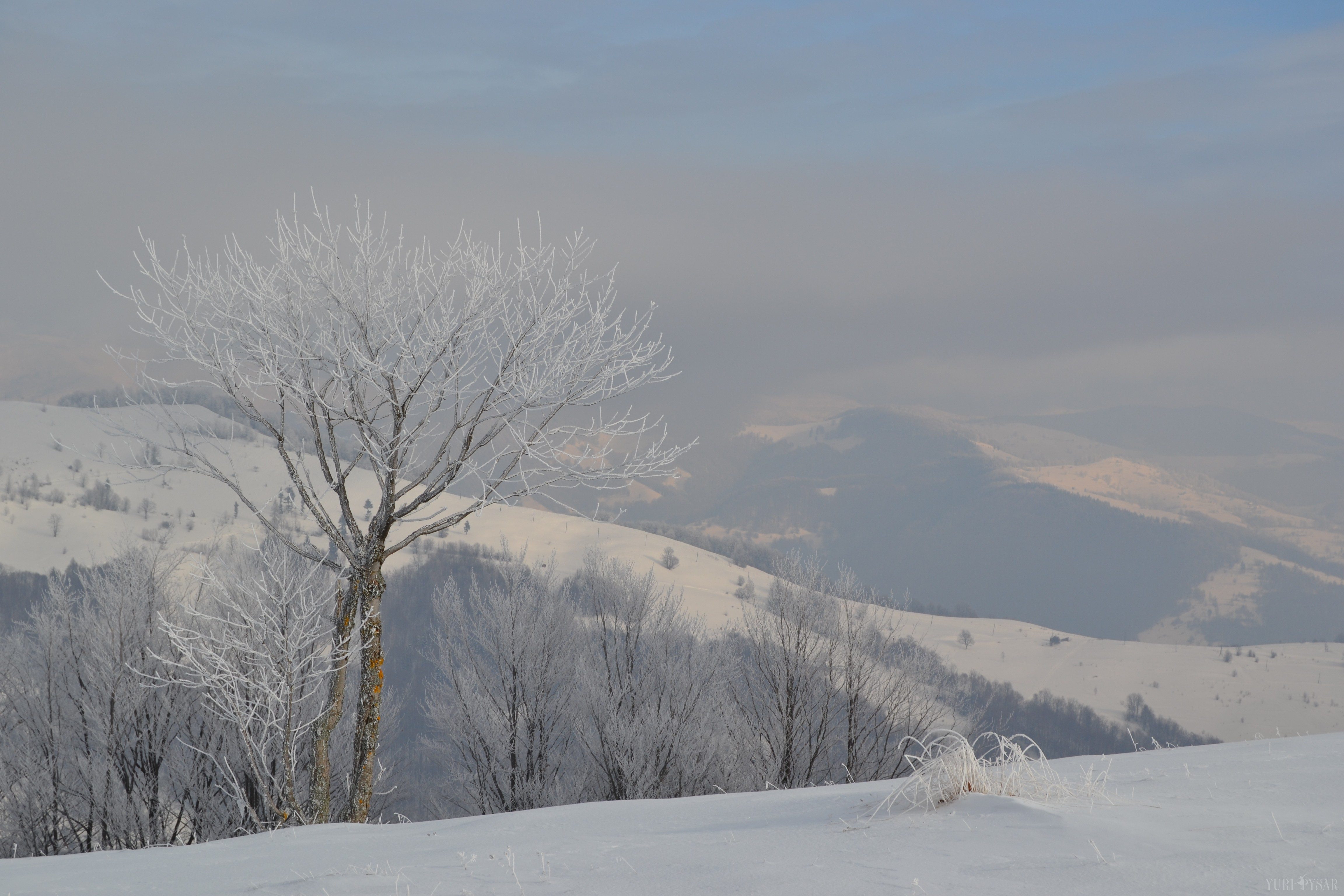 carpathian mountains in snow