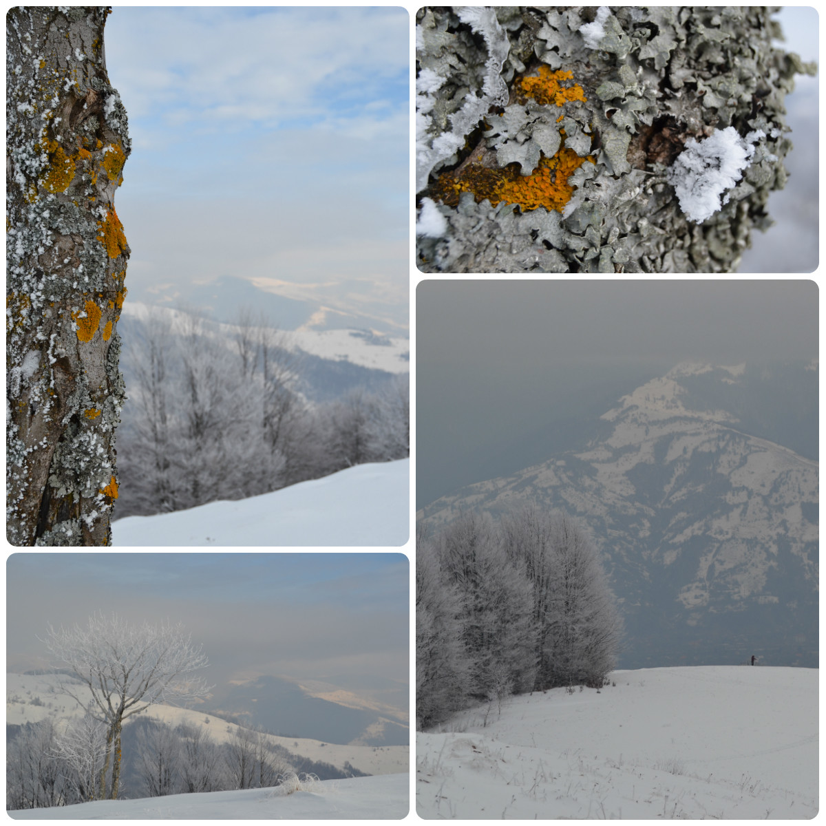 winter nature in snow, landscapes in carpathians